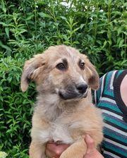 Hundmädl ELLA sucht Für-Immer-Zuhause