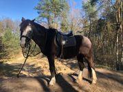 Reitbeteiligung Wanderritte Ponyreiten
