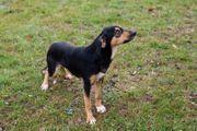 MAX - stattlicher Hundebub schön aktiv
