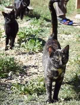 Bild 4 - LENA - Wunderbares Katzenmädchen sucht ihre - Wilhelmsfeld