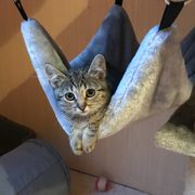 10 Wochen alte Kitten suchen