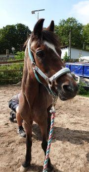 Reitbeteiligung Pony reiten