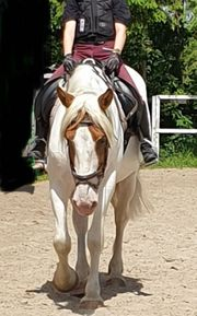 Bella sucht ein liebevolles pferdegerechtes