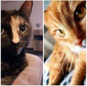 Katzen EKH 7 Jahre