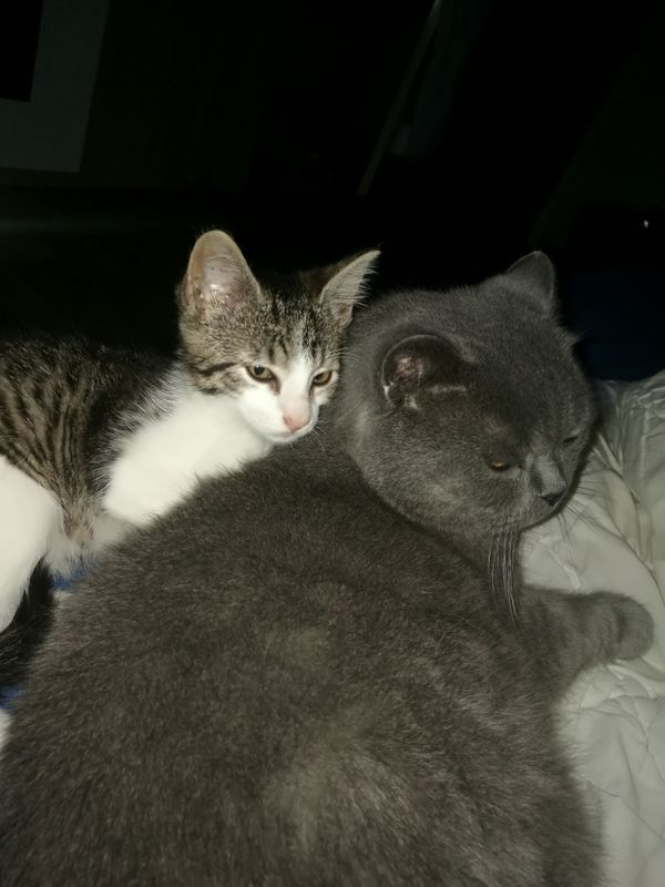 Katzenbaby Eule sucht ein neues