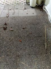 Waschbeton-Platten Betonplatten Rasengitter