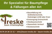 Baumfällung Baumservice Baumpflege Kronenauslichtung Forst