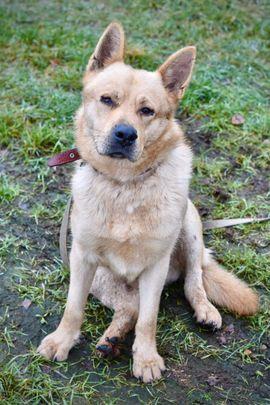Bruno - ein Goldschatz mit Handicap: Kleinanzeigen aus Bruckmühl - Rubrik Hunde