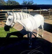 Odie ist ein einmaliges Pferd