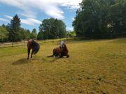 Paddockbox mit Auslauf für Pony