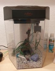 Aquarium 8 Eckig