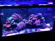 Meerwasser aquarium Rad sea s