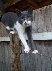 wunderschöne Katzen suchen zu Hause