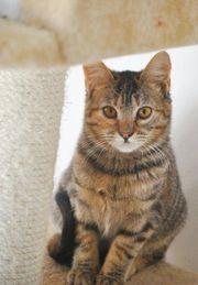 LULA - Zartes Katzenmädchen sucht ihre