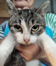Kreta-Katze Valentina sucht ein Zuhause