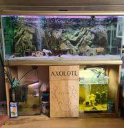 Axolotl Komplett Aqarium