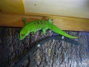 Zoo Med Naturalistic Terrarium 30x30x45