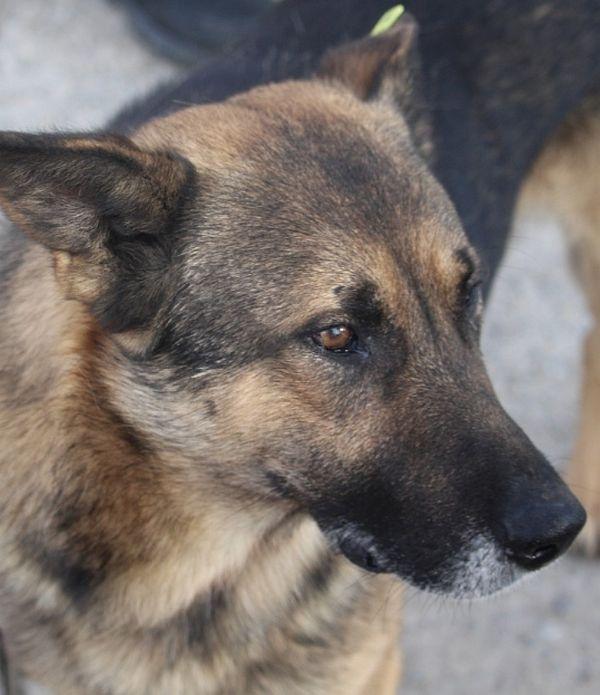 Tierschutzhund - Duncan -