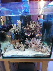 Meerwasseraquarium mit gesamter Technik Besatz