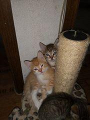 Katzen Mix Babys
