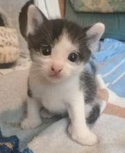 Katzenbabys sehr süß