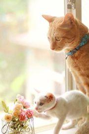 Hund Katz Maus Betreuung