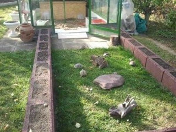 Wir nehmen kostenlos Landschildkröten bei