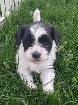 Hunde In Burgau Kaufen Und Verkaufen Bei Quoka De