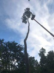 Professionelle Baumfällung - Abtragung mit Seilklettertechnik