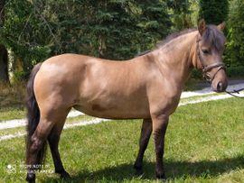 Pferde - Hübsche Ponystute