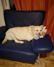 Hund Cira 7 Jahre