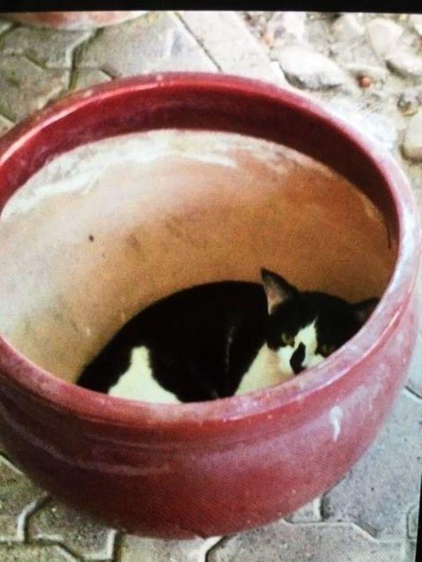 Katze Charly sucht ein liebes