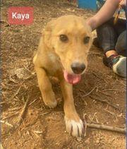 Kaya ca 5 Monate alt