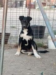 Monty - lieber freundlicher kleiner Hundemann