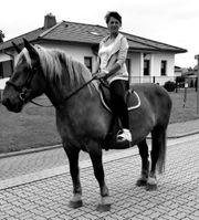 Stute Kaltblut Fuchs Freizeipferd