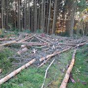 Fichten-Stammholz