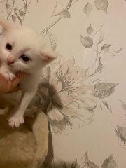 Wunderschöne Baby Katzen suchen zu
