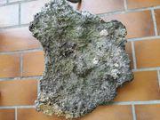 Meerwasser Gestein Riffplatte