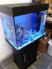 Merrwasseraquarium Komplett