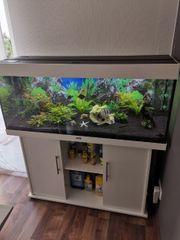 Aquarium 240L komplett