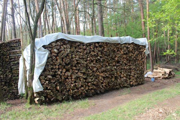 Brennholz trockenes Kiefern-Brennholz mit 100cm