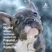 dringend spenden für tierschutz Hunde