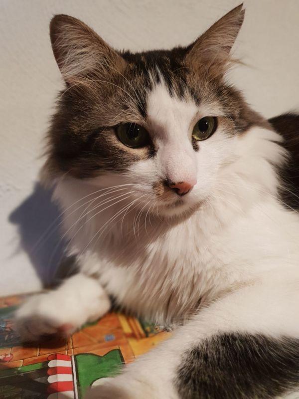 Katze vermisst in Ketsch Erste