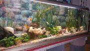 Großes Aquarium von Juwel