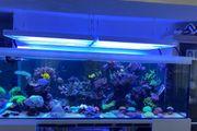 habe viele Korallen Meerwasser Aquarium