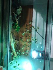 Terrarium mit Schlange