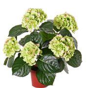 KunstpflanzeHortensien in Grün Rosa zur