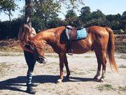 Reitbeteilung gesucht Reiter sucht Pferd