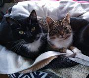 Kater Karli und Katze Pia