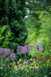 Kleingarten Gartenparzellen zu vermieten